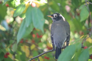 barb-heagy-book-bash-fall-robin-001